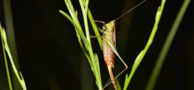 Biodiversidade | Roteiro para reduzir o declínio dos insectos