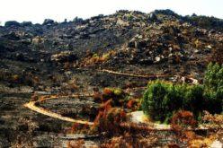 Natureza | Bloco deseja que Governo mantenha financiamento contra incêndios no Parque do Gerês