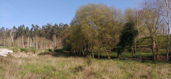 Agricultura | Guimarães volta a abrir candidaturas para cedência de terrenos ao Banco de Terras