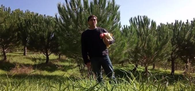 Crowdfunding | Galinha branca portuguesa: um passo contra a extinção