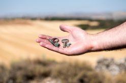 Exposição | No MIEC de Santo Tirso, 'Creative (un)makings' propõe romper com a prática e pensamento arqueológicos