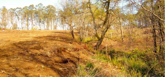Primavera | Esposende assinala Dia da Árvore