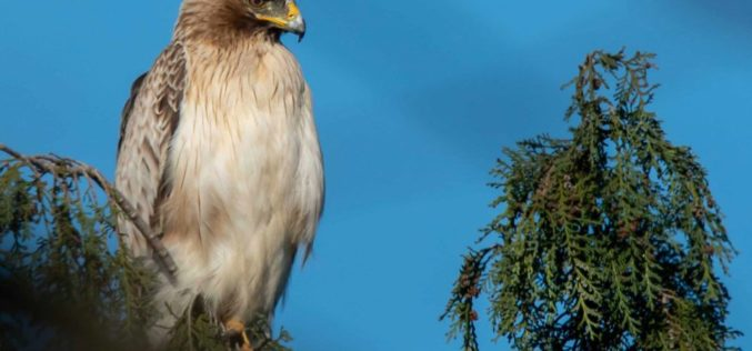 Fotografia | José Alves: 'bird watching' no Parque da Devesa