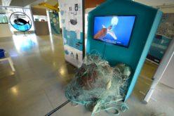 Ambiente | 'Mar de Plástico' no Parque da Devesa em Famalicão