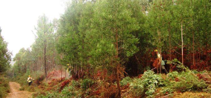 Floresta | Forestis avança com projeto piloto de agrupamentos de baldios em Viana do Castelo