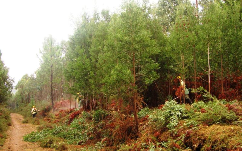 Floresta   Forestis avança com projeto piloto de agrupamentos de baldios em Viana do Castelo