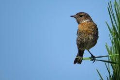 Ambiente | Solidarity Soul organiza mais uma ação de limpeza na Reserva Ornitológica do Mindelo