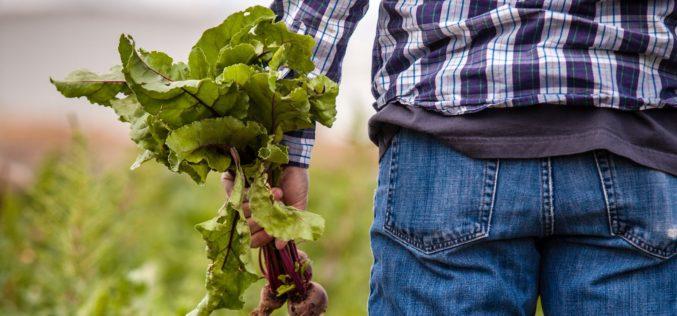 Coronavírus | PAN pede ao Governo mais apoios para a produção agrícola