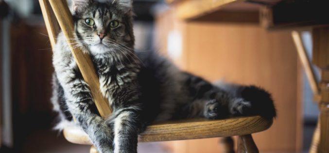 Animalia | PAN quer proteção legislativa para todos os animais e penas de prisão para quem pratique maus tratos