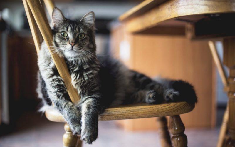 Animalia   PAN quer proteção legislativa para todos os animais e penas de prisão para quem pratique maus tratos