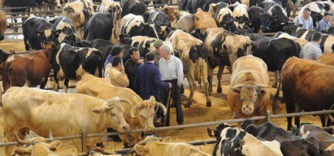 Coronavírus | Póvoa de Varzim suspende mercado de gado em Rates