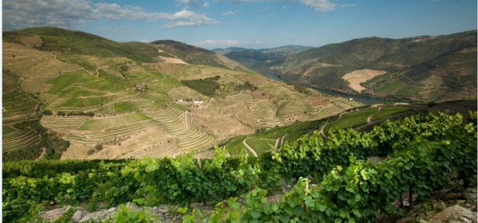 Consumo | Ferreira, Sandeman e Offley: vinhos do Porto Vintage 2018