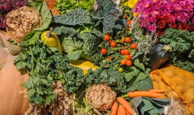 agricultura-hortícolas- alexander-schimmeck-6bykmLxy-3Y-unsplash