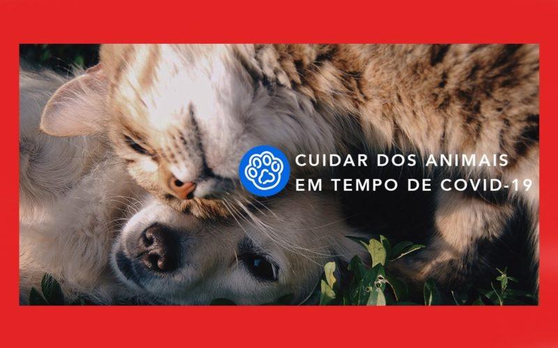 Animalia   Petify e Animalar unem esforços para combater dificuldades causadas pela Covid-19