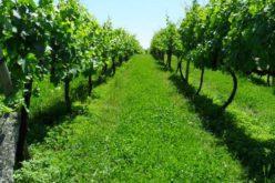 Agricultura | INE mantém Recenseamento Agrícola 2019