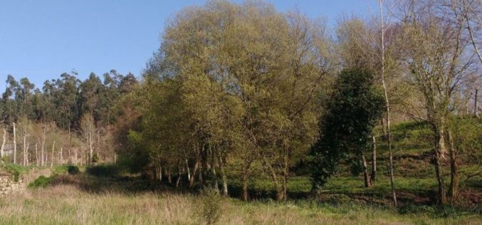 Floresta | Guimarães limpa mais de 100 hectares nas faixas de gestão de combustível