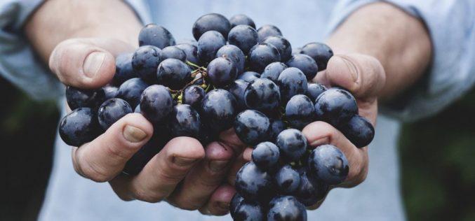 Agricultura | Fenadegas congratula-se com apoios financeiros ao setor vitivinícola