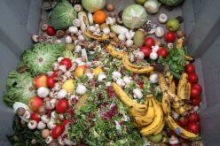 Ambiente | 20 Milhões de euros para municípios recolherem biorresíduos