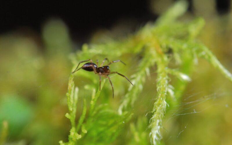 Biologia | O outro lado da atual extinção de insetos