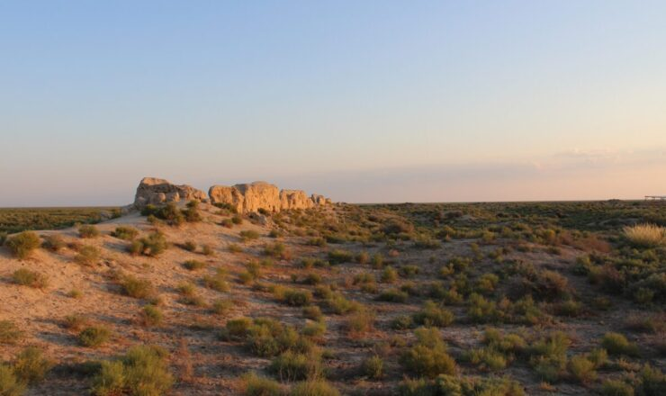 Ashley Haruda - Uni Halle assentamento de Dhzankent in Kazakhastan cat remains pic_20200709112408_cc5a75432e