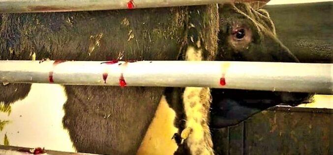 Animalia | PAN pretende reforçar o bem-estar animal no transporte de animais vivos