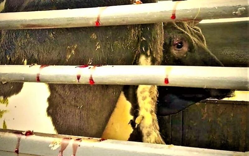 Animalia   PAN pretende reforçar o bem-estar animal no transporte de animais vivos