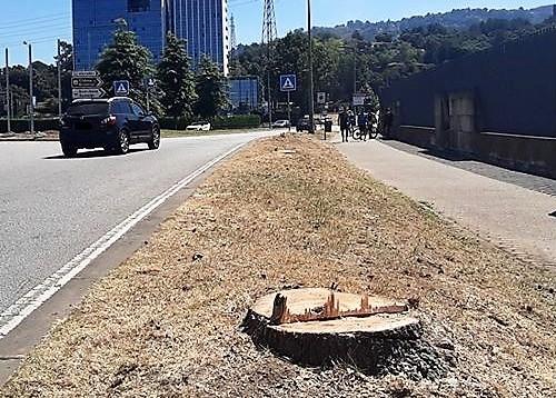 Carlos Almeida - abate de árvores em Braga _ec0