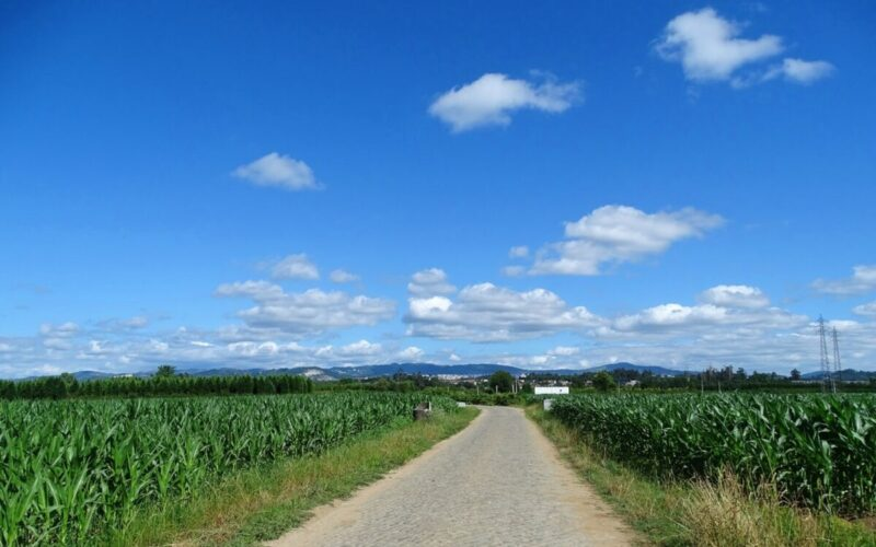 Agricultura | Portugal reforça fundos da PAC após negociação do Conselho Europeu
