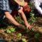 Formação | Projecto Agroecológico do Soajo promove cursos de Permacultura