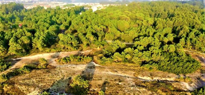 Território | Reserva Ornitológica do Mindelo: é preciso garantir a identidade que há seis décadas lhe pertence