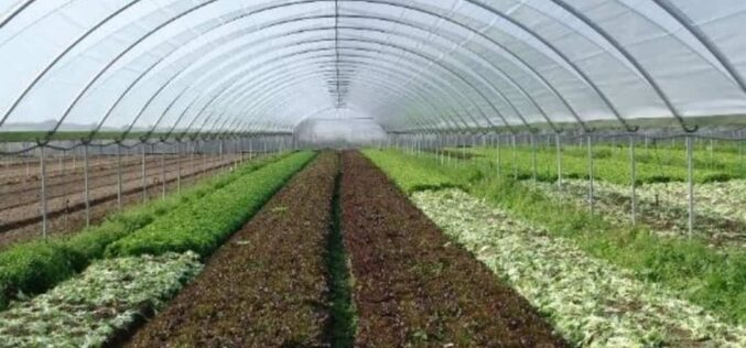 Pandemia | Ministério da Agricultura divulga orientações específicas para o produção e comercialização de frutas e legumes