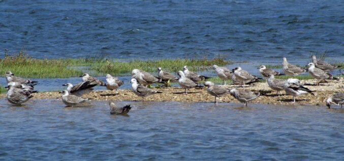 Ambiente | Esposende assinala Dia Nacional da Conservação da Natureza
