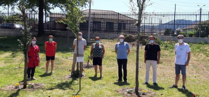 Ambiente | 'Taipas a Florir' conserva, mantém e limpa espaços verdes da 'freguesia mais verde de Portugal'
