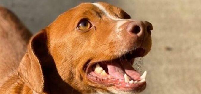 Animalia | Esposende prepara a instalação de um Centro de Recolha Oficial e outras infraestruturas destinadas a animais de companhia
