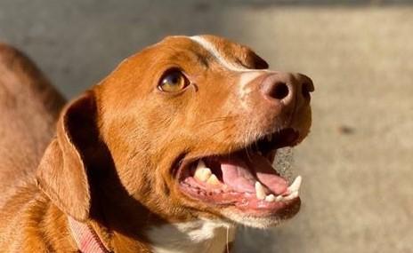 cão em aniesp adoção 84_ec