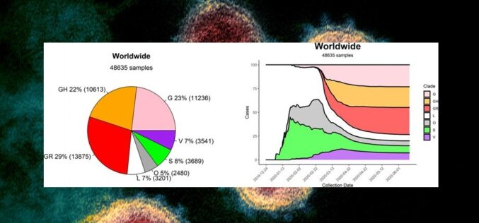 Genética | A distribuição mundial das estirpes de SARS-CoV-2