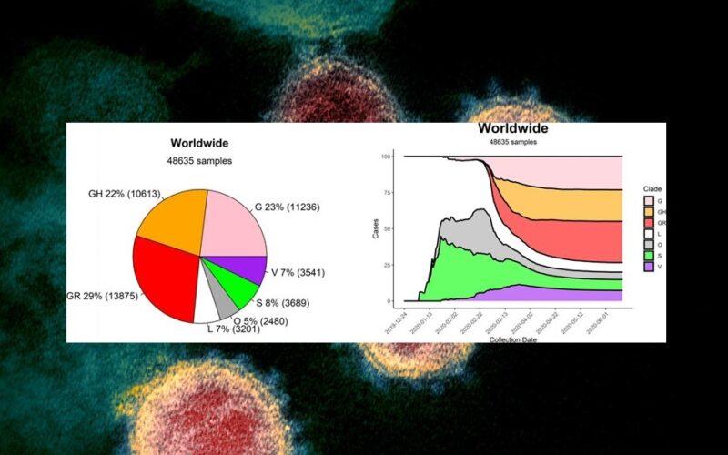 Genética   A distribuição mundial das estirpes de SARS-CoV-2