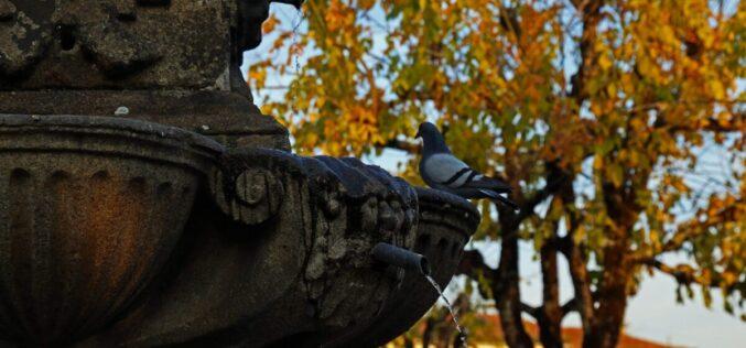 Fotografia | Concurso Municipal de Fotografia de Braga desvenda olhares sobre os Fontanários da Cidade
