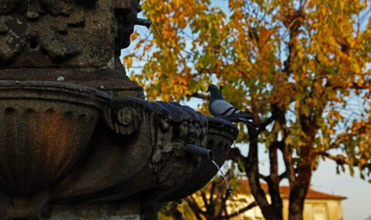 Fonte na Praça de Santiago by Braga