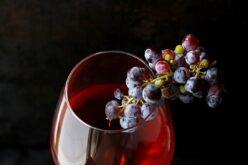Viticultura | Exportações de vinhos portugueses em crescimento