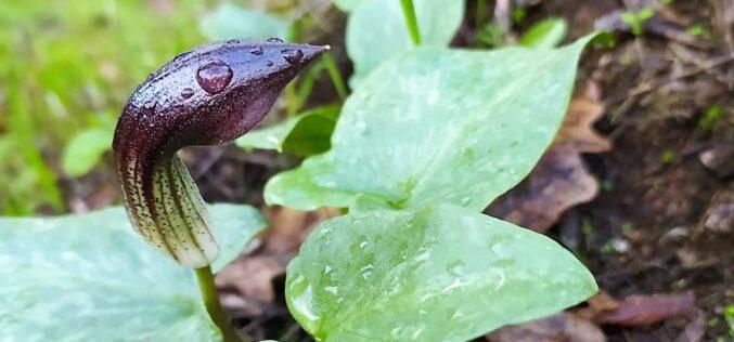 Natureza | BioRegisto assinala milésima observação