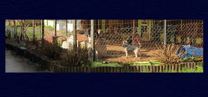 Animalia | Trofa prepara requalificação de canil municipal