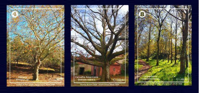 Floresta  | Vizela e Coração Azul escolhem a 'Árvore do Ano'